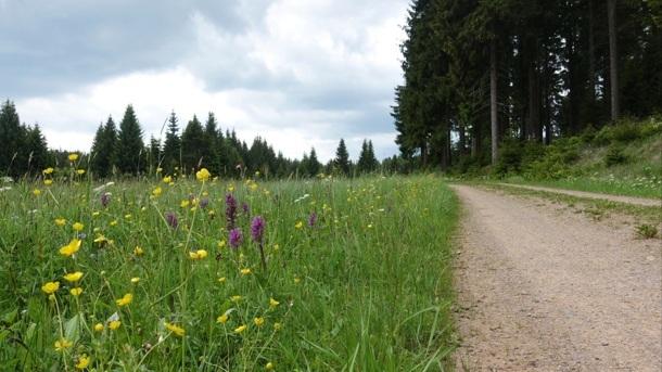 Grenzenloser Rundwanderweg