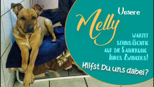 Wohlfühlzimmer für unsere Tierheimhunde