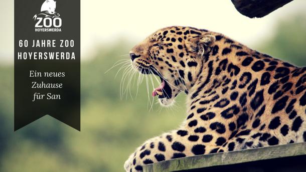 Neues Gehege für Leopardenfamilie