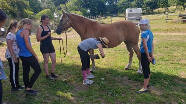 Ein Pferd für die kleinen Voltis