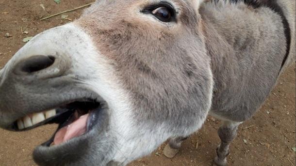 Tiergehege Am Fallstein Osterwieck: Zaun für neues Gehege