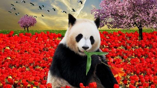 Pandagehege für den Kinderzoo