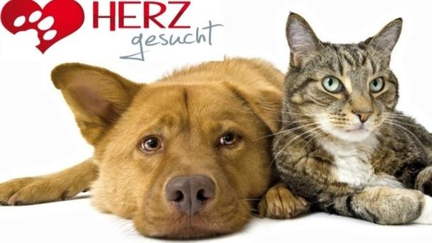 Errichtung eines Tierheims in Elbe-Elster durch die Tierhilfe Südbrandenburg e.V.